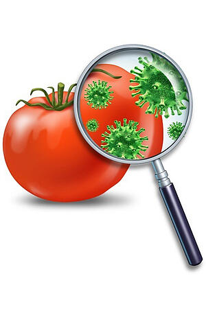 magnifying-glass-looking-at-tomato