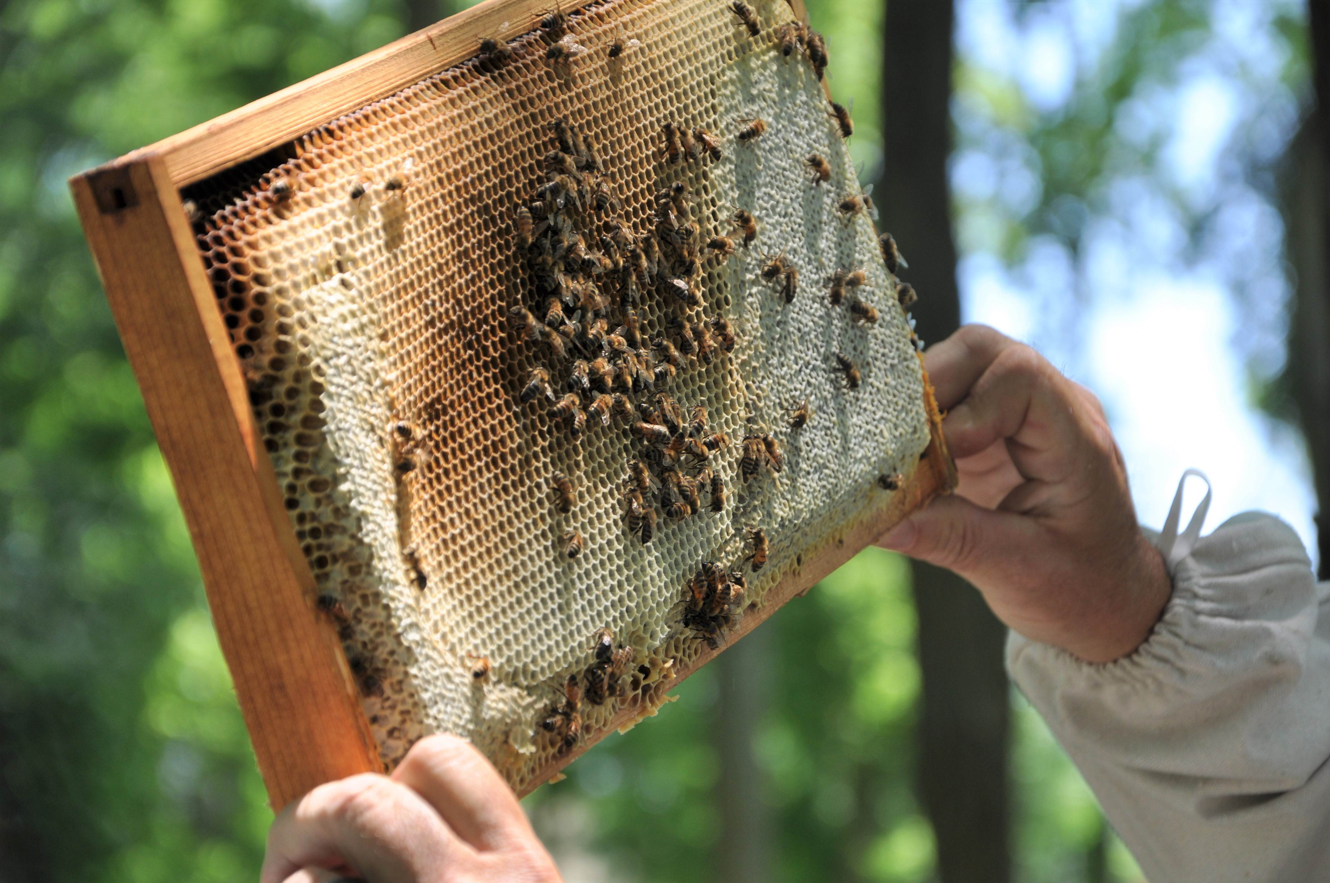 Celebrating Pollinator Week 2018