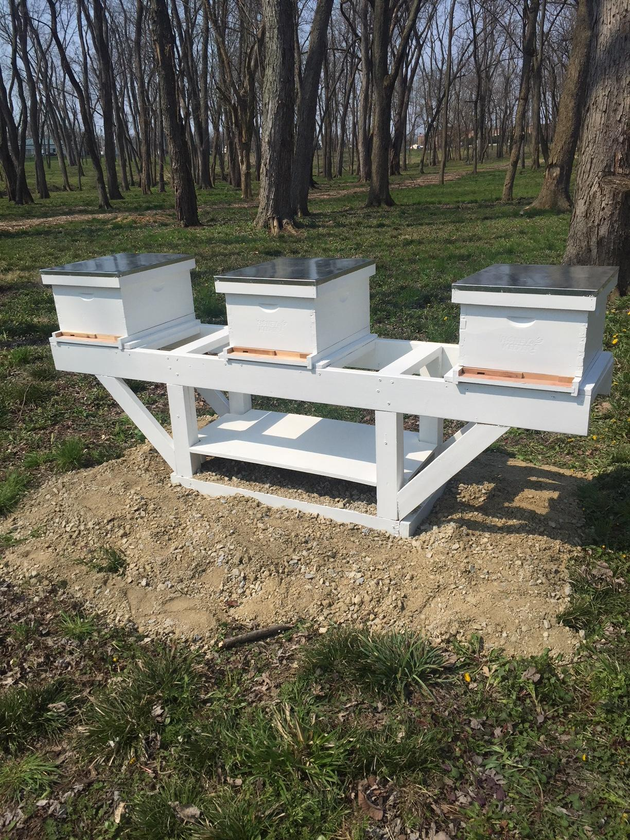 Act Small, Think Big: The Beginning of a Beekeeping Journey at SugarCreek